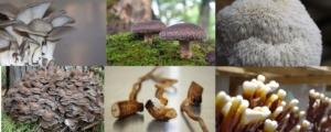 Micoterapia mejora y cuida la salud